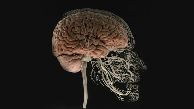 Alzheimer y periodontitis